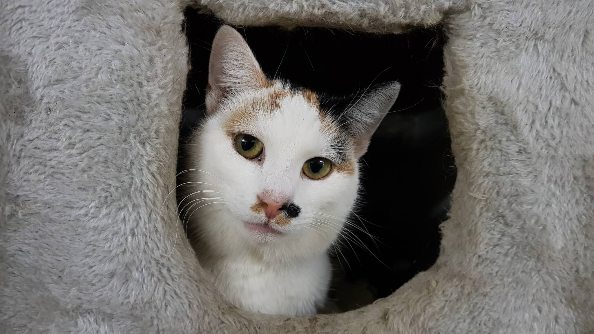 Kitty Monroe